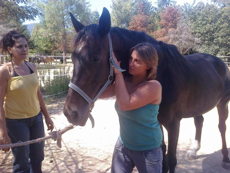 Aggiustamento cavallo