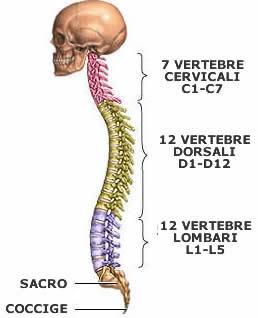 Otto esercizi contro osteochondrosis cervicale di una fotografia